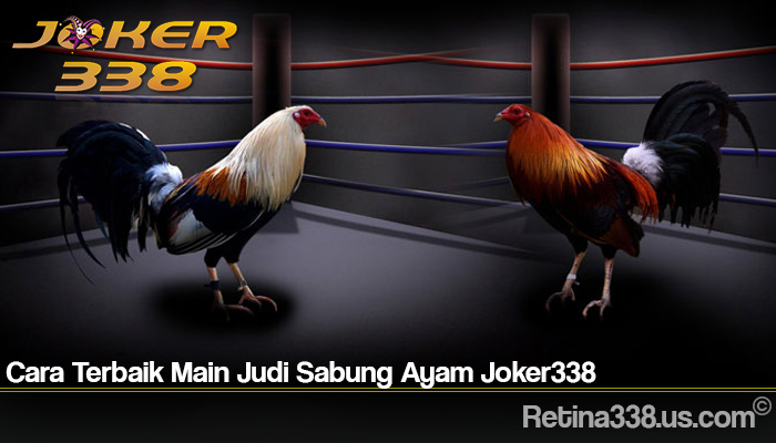 Cara Terbaik Main Judi Sabung Ayam Joker338