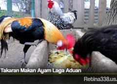 Jenis Takaran Makan Ayam Laga Aduan