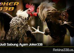 Main Judi Sabung Ayam Joker338
